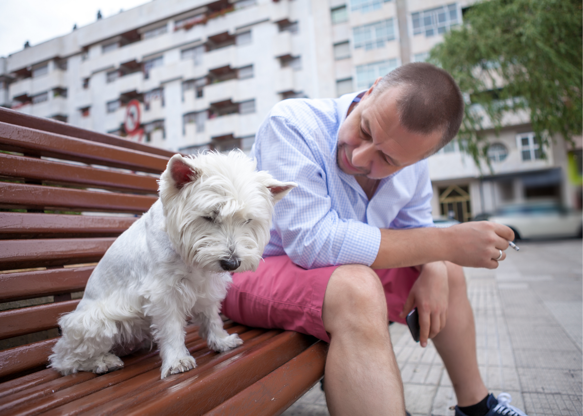 Why you should stop smoking around pets now